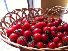 自家菜園からもあり 特別に作って頂いているものあり  熟れたミニトマトの美味しきこと 盛夏の頃