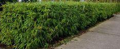 Stappenplan voor het aanleggen van een bamboehaag
