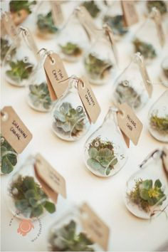 Succulent Wedding Favors / Place cards | Beach Glam Decor and Details - Aqua Mint and Luxe Gold