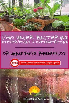 Biofertilizantes ricos en microorganismos benéficos para aplicaciones sobre suelo y plantas. Aprenda a realizarlo con este manual práctico. Además, breve descripción sobre investigación sobre el uso de bacterias fototróficas para la depuración de aguas grises. Herbs, Microorganisms, How To Make, Plants, Herb, Spice