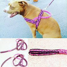 Paracord Dog Harness Handmade Dog Harness by OurUniverseShop