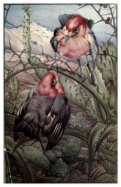 Espinas-News of spring and other nature studies 1917- Ilustrado por Edward J. Detmold