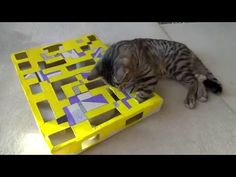 Interactive cat box (DIY) - YouTube