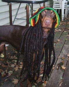 Snoop Dog's Dog Foshiz