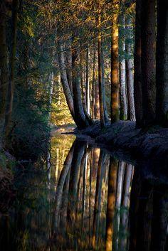 Dark Forest, Nagel, Bavaria, Germany