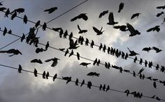 Image: A congregation of birds are silhouetted against a morning sky, in Paraguachon, Colombia, Wednesday, Sept. 9, 2015. Venezuelan President Nicolas Maduro has expanded an anti-smuggling offensive along the country's frontier with Colombia, and ordered another main crossing, this one in Paraguachon, closed Monday night as part of a two-week-old anti-smuggling offensive.