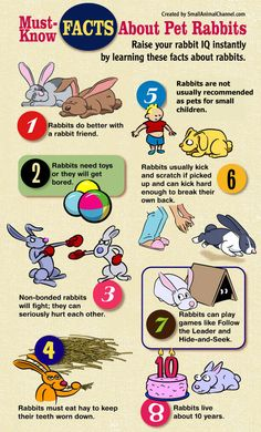 Some Bunny Factoids.   [Keep in mind, there are always exceptions to the rules.]