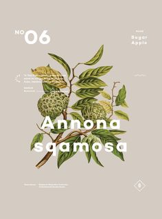 A Few Plants 06 — Designspiration