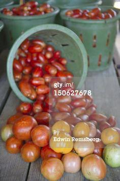 Stock Photo : Tomatoes.