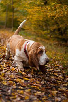 Autumn Huxley