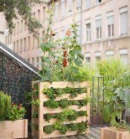 Potager vertical - Botanic - Marie Claire Maison