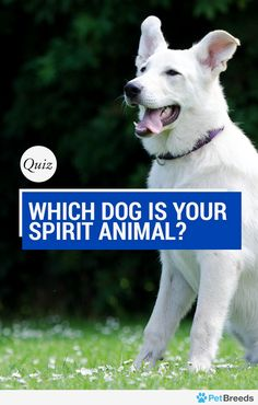 Which Dog Is Your Spirit Animal? Do you love to exercise or do you prefer to spend your days glued to the TV? Either way, there is a dog out there that matches you, and the data experts at PetBreeds created this quiz to help you discover your true canine spirit animal.