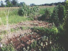 Il nostro orto@ Mami e silvi