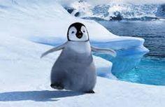 Afbeeldingsresultaat voor pinguins liefde