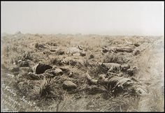Second Boer War - ABW - British casualties lie dead on the battlefield after the Battle of Spion Kop 24 January 1900 British Army Uniform, British Soldier, West Africa, South Africa, Casualties Of War, Protest Art, War Photography, British Colonial, History Photos