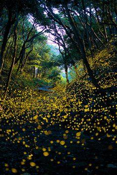 Into The Dream - See Firefly wild dance, Wakayama, Japan!!!!