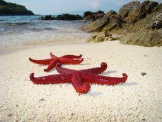 Star fish on ksamil beach, Albania Photo by Gazim Xhemaili Visit Albania, Seaside Beach, Cool Places To Visit, Sea Shells, Underwater, The Good Place, Tourism, Coastal, National Parks