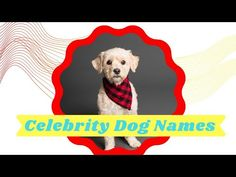 Top 41 best Celebrity Dog Names With Owner 2021 ! Best Dog Names ! Unique Dog Names - YouTube Cute Names For Dogs, Best Dog Names, Pet Names, Best Dogs, Cute Dogs, Celebrity Dogs, Names With Meaning, Dog Lovers, Lifestyle