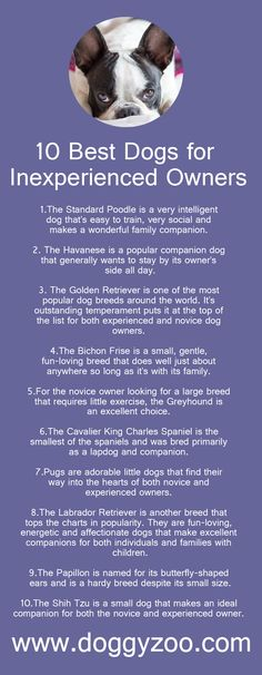 10 Best Dogs for Inexperienced Owners