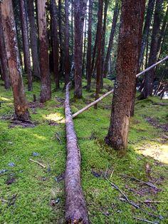 Forêt Megève