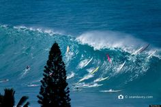 Waimea beach Oahu surfing | Huge Surf On North Shore Of Oahu Shows You Don't Have To Go To Nazaré ...