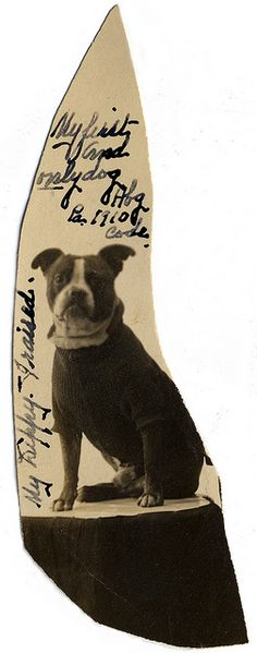"""""""My first and only dog,"""" 1910. Lovely, cutout, vintage dog photo."""