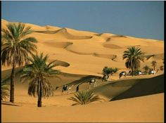 Bello oasis en el desierto Sahara