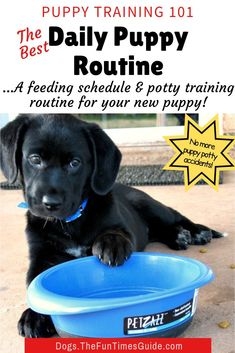 The Best Puppy Routine & Daily Dog Schedule: How often do you feed a puppy? How often does a puppy need to go to the bathroom? We've got the answers here. See how to create a puppy potty training schedule & feeding schedule for your new dog. Puppy Feeding Schedule, Puppy Schedule, Puppy Training Schedule, Training Your Puppy, Dog Training Tips, Training Classes, Training Pads, Potty Training Puppies, Training Academy