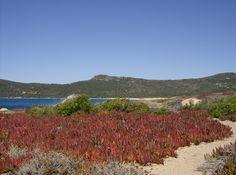 Tizzano,Corsica