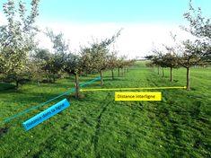 La distance de plantation entre les arbres fruitier en demi-tiges