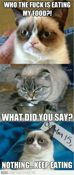 Who's eating Grumpy Cat's food. I LOVE grumpy cat :] Grumpy Cat Quotes, Gato Grumpy, Funny Grumpy Cat Memes, Grumpy Kitty, Cat Jokes, Funny Animal Pictures, Funny Animals, Cute Animals, Animal Memes