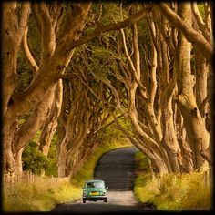 """Through the Dark Hedges"" - © Emanuele Fusco Photography"