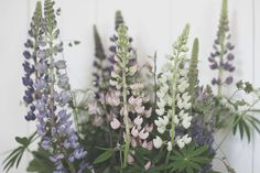 Strenghielm Garden, Floral, Plants, Shop, Flowers, Garten, Lawn And Garden, Gardens, Plant