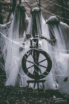 "secretlyzanygarden: "" Spirit of the spinning wheel… """