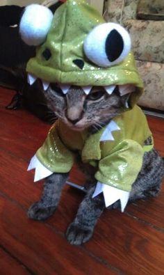 Lizard kitty