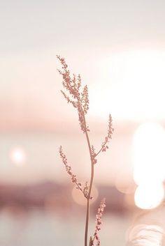 Tout en d licatesse iphone hintergrundbilder hintergrundbilder Tout en d licatesse iphone hintergrundbilder hintergrundbilder Blumen Blumen hintergrundbilder Tout en d licatesse nbsp hellip malen aquarell Rose Gold Wallpaper, Pastel Wallpaper, Flower Wallpaper, Nature Wallpaper, Wallpaper Backgrounds, Iphone Wallpapers, Beautiful Wallpaper, Trendy Wallpaper, Pink Wallpaper Iphone Light