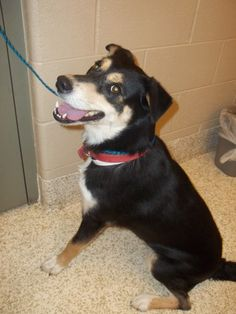 My name is Star.  I'm a 1 year old, female, tri color, Shepherd mix and Jane is not allowed to adopt me.  http://www.petfinder.com/petdetail/22344067?rvp=1