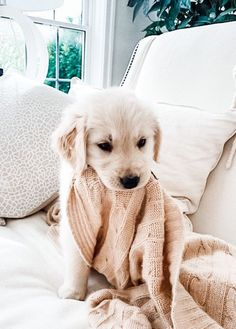 Cute Little Puppies, Cute Little Animals, Cute Dogs And Puppies, Cute Funny Animals, Doggies, Puppies Puppies, Dalmatian Puppies, Cute Small Dogs, Small Puppies