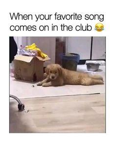 Funny Animal Jokes, Funny Dog Memes, Funny Dog Videos, Funny Video Memes, Funny Animal Pictures, Animal Pics, Funny Captions, Funny Quotes, Pet Videos