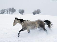 drzewa, Koń, śnieg