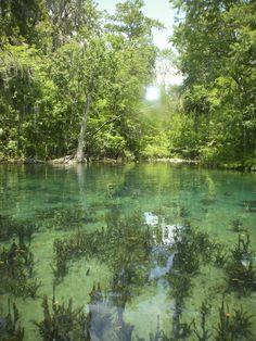 Ocala Silver Springs State Park ~ Ocala, Florida