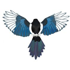 Magpie Study in Color Art Print