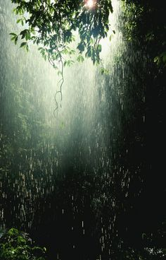 Ook bij regen weet men prachtige foto's te trekken in het bos!