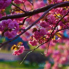 Spring....
