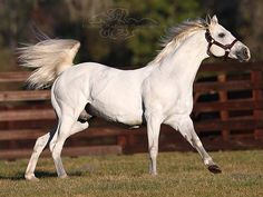 Alphabet Soup_ New York's leading active Sire by both Lifetime Stakes winners (44) and Graded Stakes winners (14)