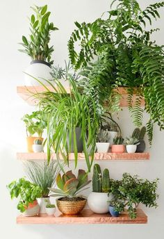 wall shelves with house plants in white containers