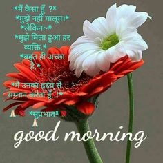 Good Morning Pictures 2018 In Hindi Punjabi English - Whatsapp Images Good Morning Flowers Pictures, Good Night Flowers, Good Morning Beautiful Flowers, Good Morning Photos, Good Morning Gif, Morning Pictures, Good Morning Wishes Quotes, Good Morning Dear Friend, Morning Quotes Images