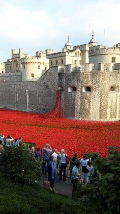 Tower of London...poppy tribute: