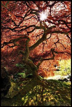 japanese garden,Portland,Oregon