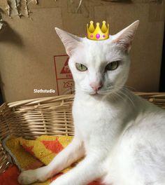 Good Morning Caturday!!!  BaiBai, Queen of Slothstudio 😸😸😸  www.facebook.com/Slothstudio